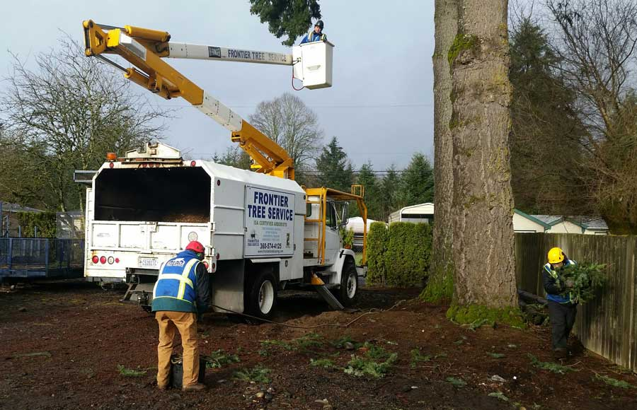 tree service cleanup
