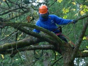 Tree Damage Assessment Vancouver WA