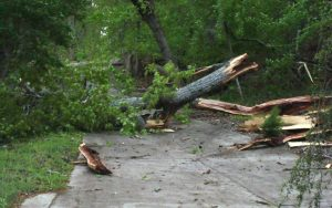 A large tree fallen over a street that has broken into pieces and is in need of Frontier's emergency tree service.