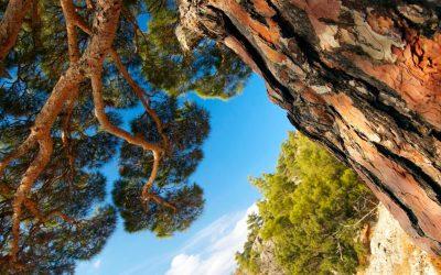 Preventing Poor Tree Care