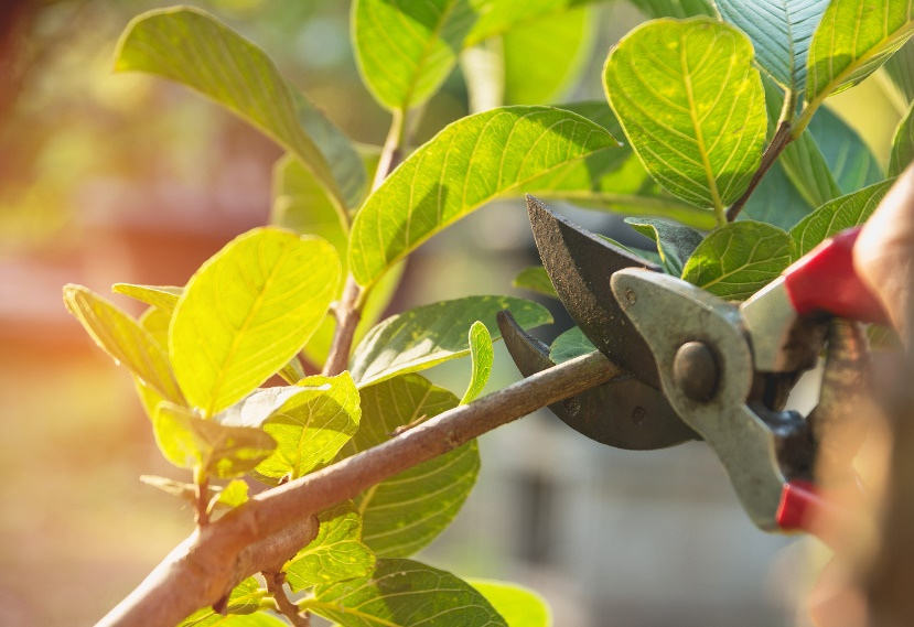 Fall pruning tips