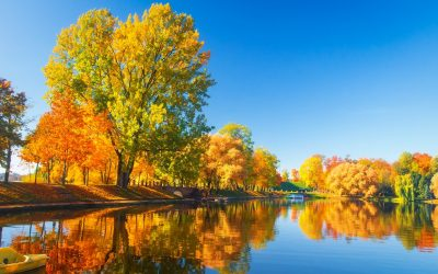 Fall Tree Care with Frontier Tree Service