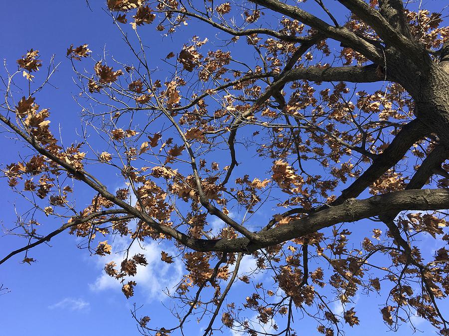Summer Tree Stress