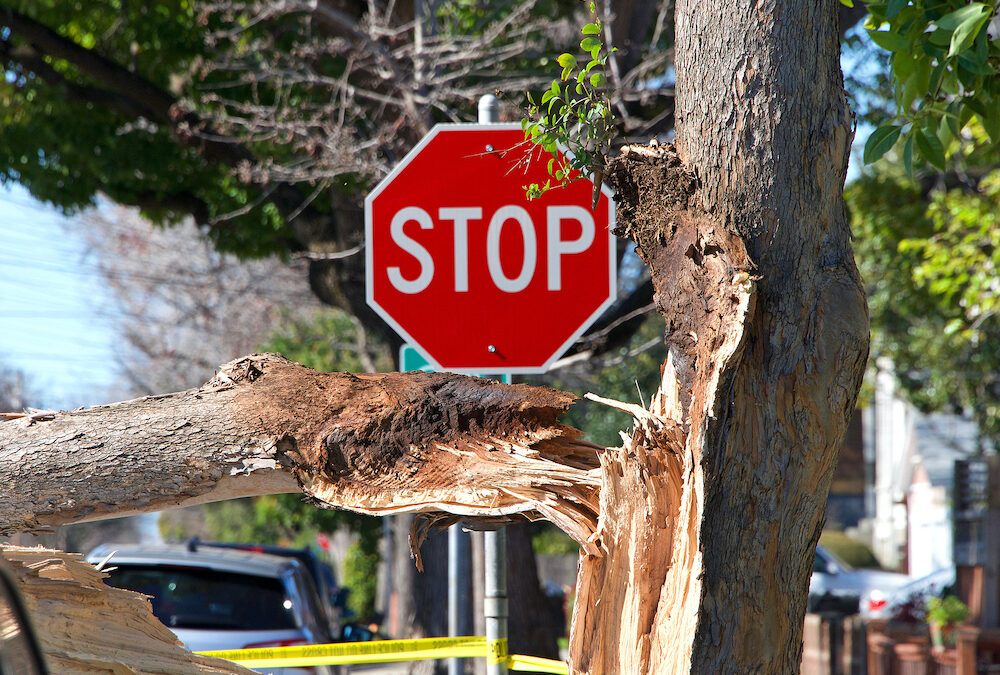 Frontier Tree Service Monthly Tips: Hazard Trees