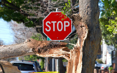 Frontier Tree Service Monthly Tips: Hazard Trees