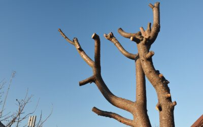 Bad Pruning: What not to do!