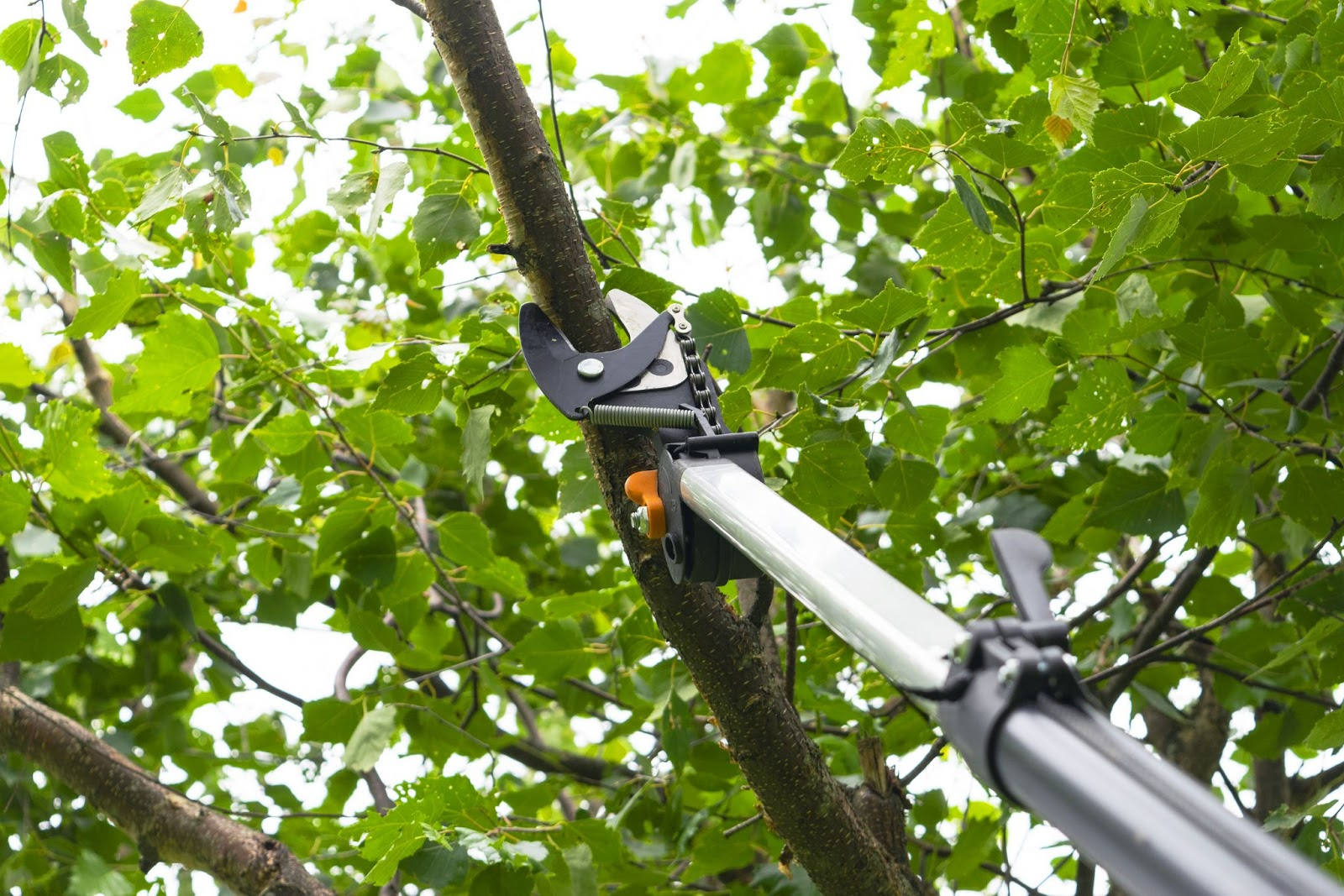 Image of pruning shears prepared to cut a branch in the middle of green leaves as part of our shrub trimming service.